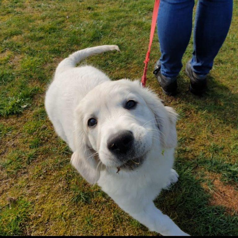 Foto Hondenschool SamenSpel