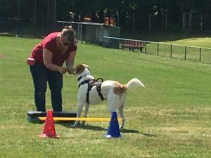 Hondenschool SamenSpel foto-10