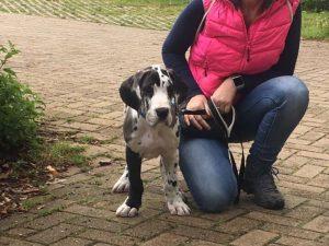 Hondenschool SamenSpel foto-13