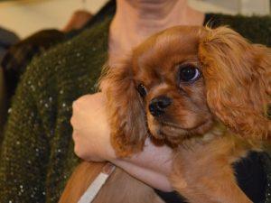 Hondenschool SamenSpel foto-15