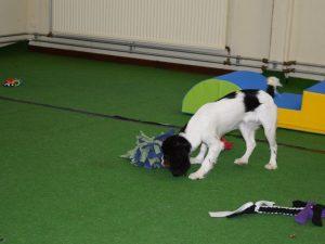 Hondenschool SamenSpel foto-17