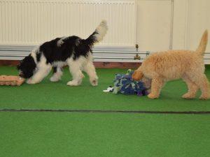 Hondenschool SamenSpel foto-18