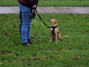 Hondenschool SamenSpel foto-21