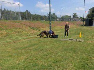 Hondenschool SamenSpel foto-3