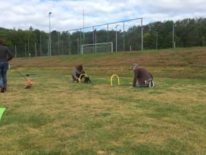 Hondenschool SamenSpel foto