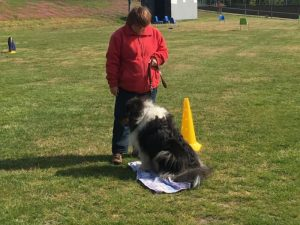 Hondenschool SamenSpel foto-4