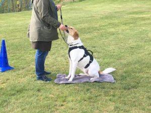 Hondenschool SamenSpel foto-5